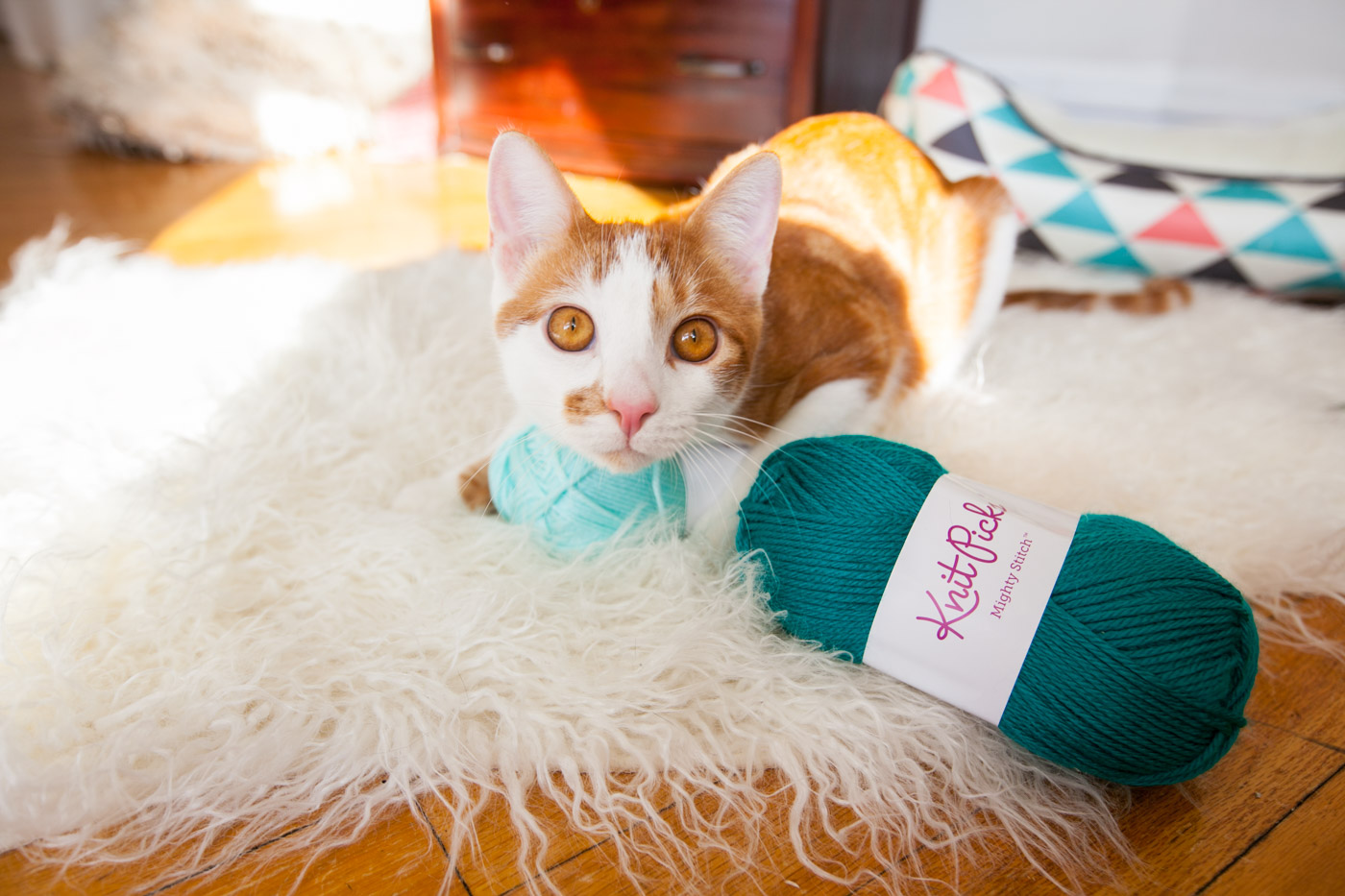 Cat playing with yarn.