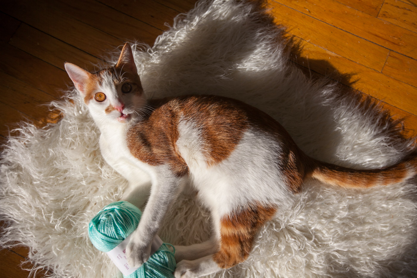 Knitting with cats: Cat playing with yarn.