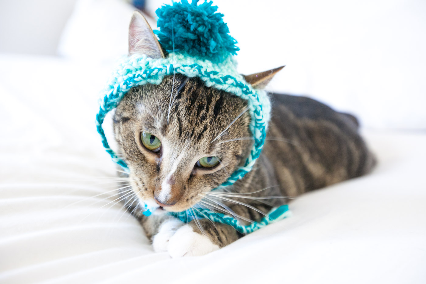 Ford the cat in a handknit hat for cats